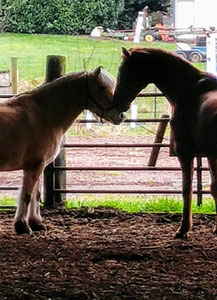 Juli and Frisco, two horses at Bright Horizons Therapeutic Riding Center, Siletz, Oregon
